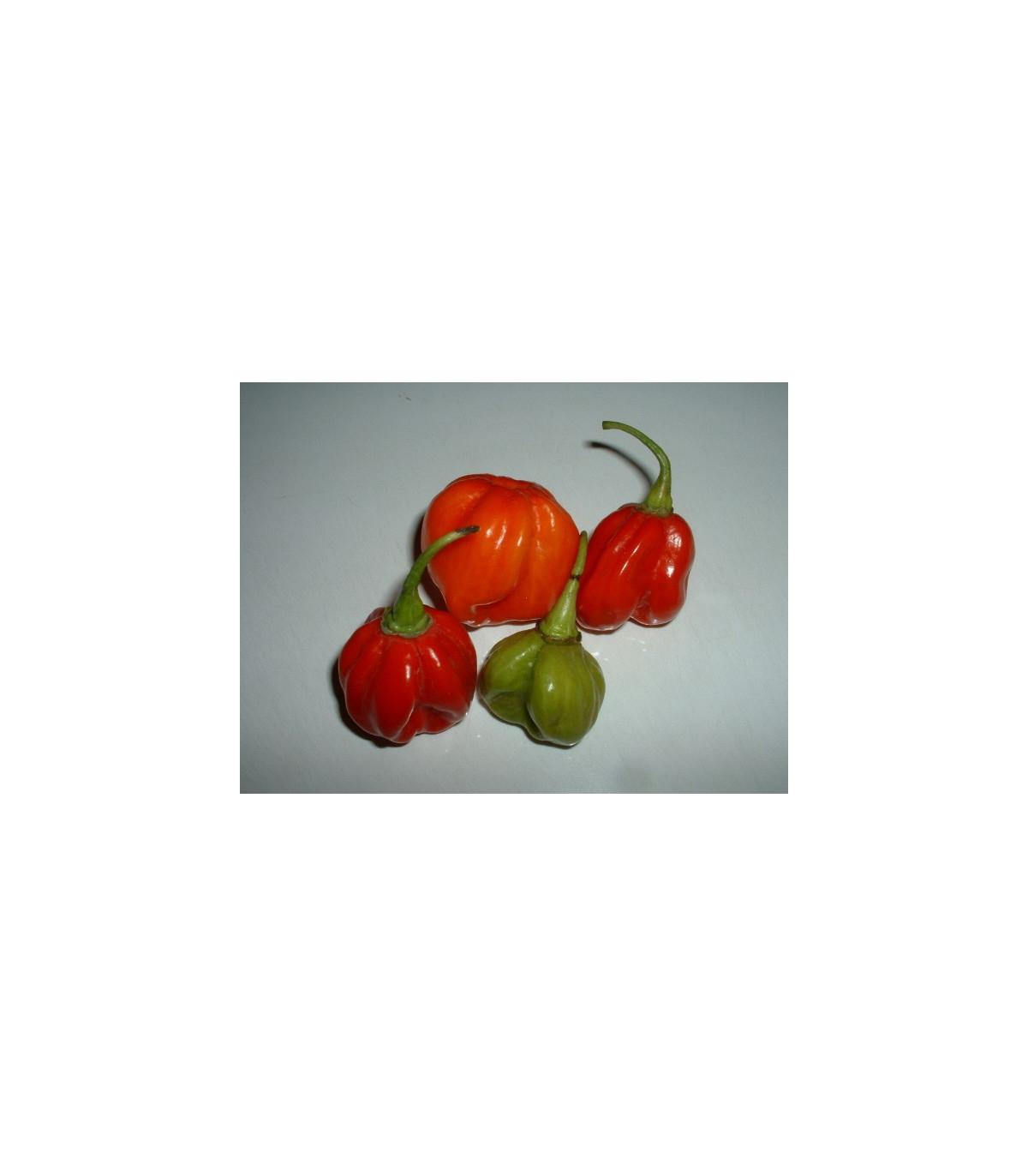 Chilli - Trinidad - semena Chilli - 6 ks - Capsicum chinense