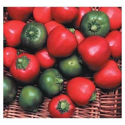 Chilli - Bomba v ráji - semena - 6 ks - Chilli