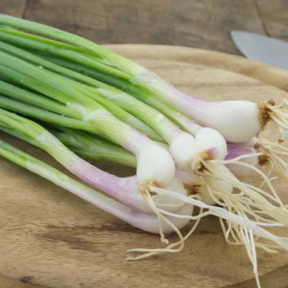 Cibule bílá jarní Bílý Lisabon - semena cibule - Allium cepa - 1 gr