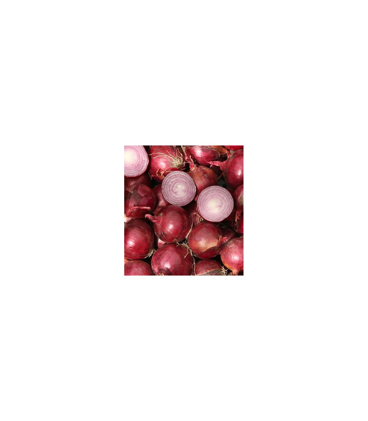 Cibuľa Grenada - semená - 0,5 gr - Allium cepa