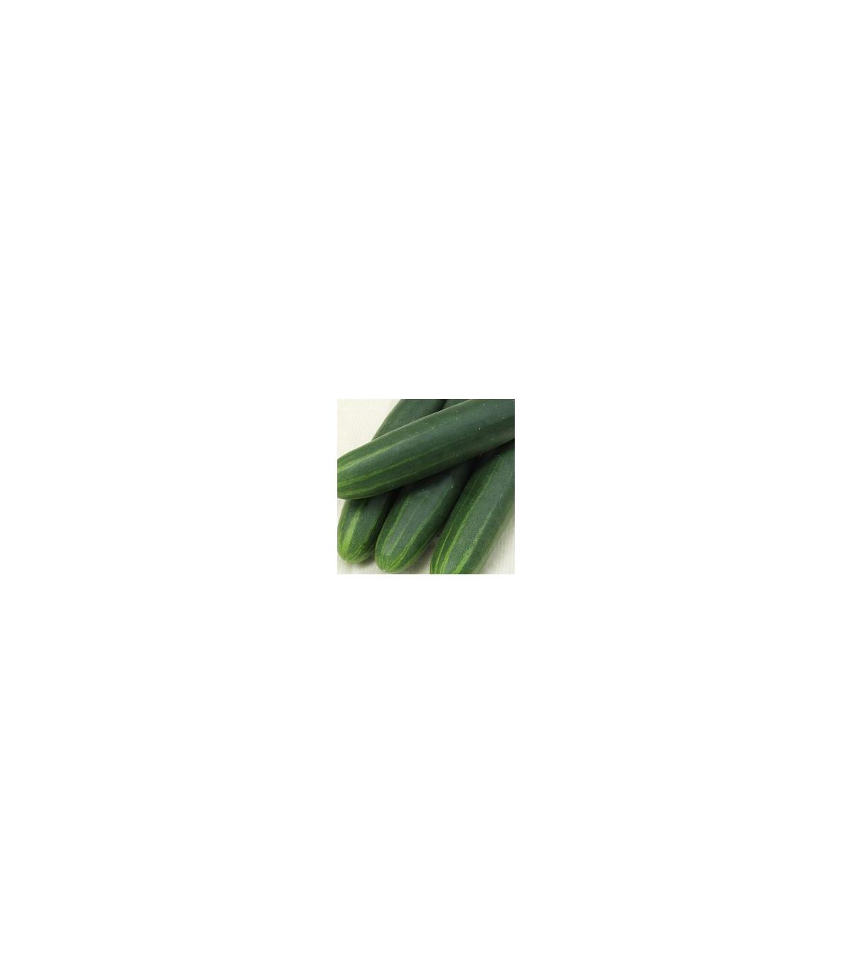 Uhorka šalátová Sonja - semená - 0,5 g - Cucumis sativus