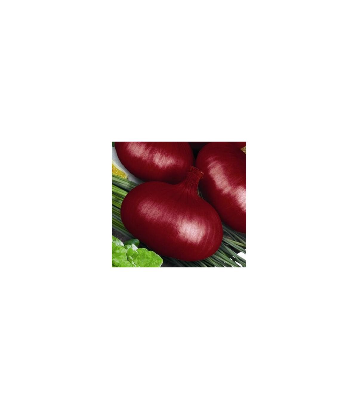 Cibuľa jarná kuchynská Brunswijker - semená cibule- Allium cepa - 0,5 gr