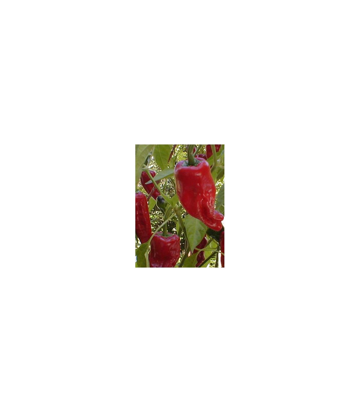 Paprika koreninová Vulkán - semená papriky - Capsicum annuum - 45 ks