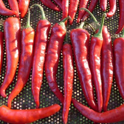 Chilli Kim Chi - predaj chilli semienok - 6 ks