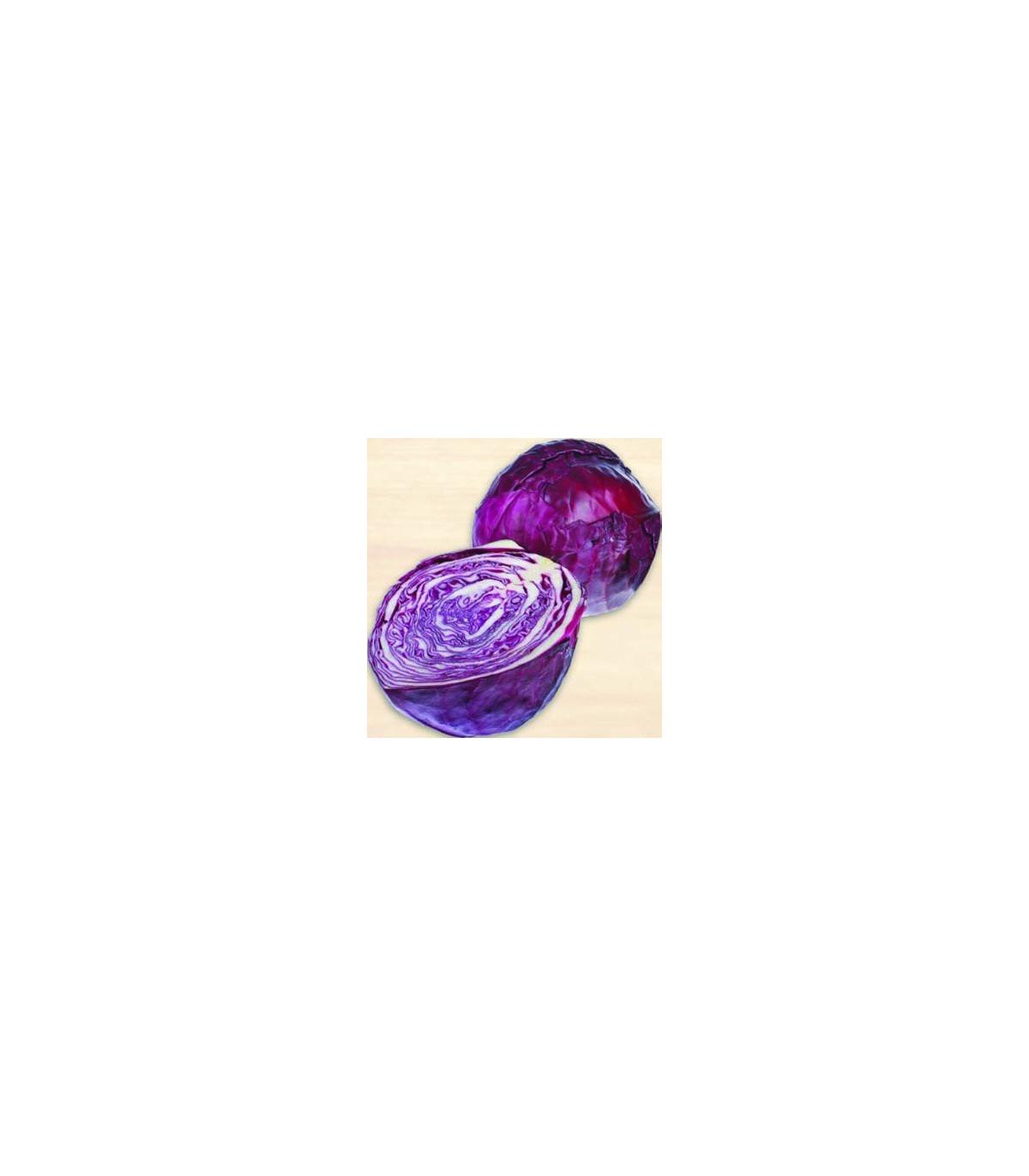 Kapusta hlávková červenočierna - semená kapusty - Brassica oleracea - 0,5 gr