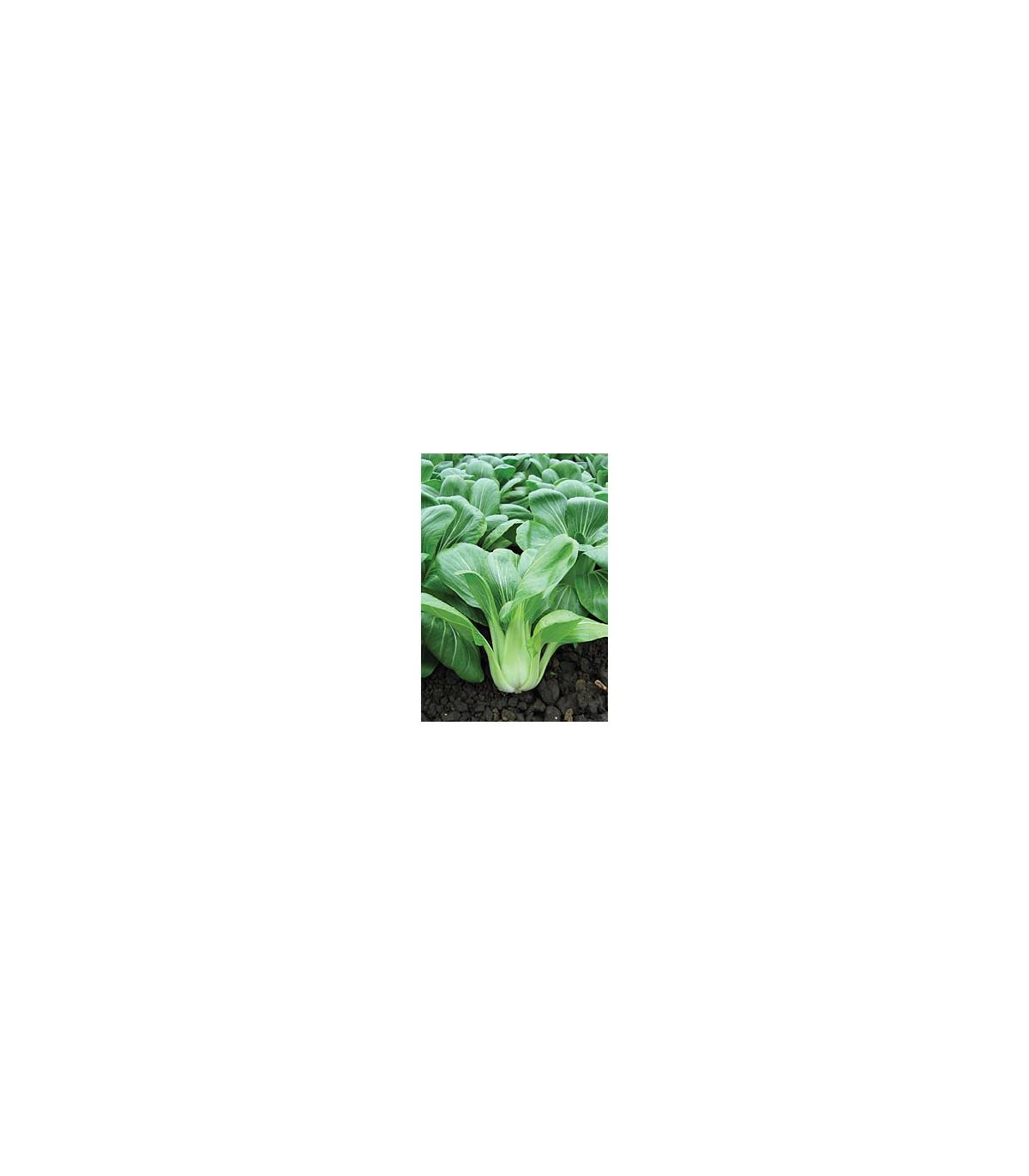 Pak Choi čínska kapusta Sagami - Ázijská zelenina - semená - 0,3 gr