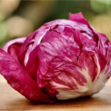 Čakanka šalátová Palla rosa - semená - 0,3 gr - Cichorium intybus