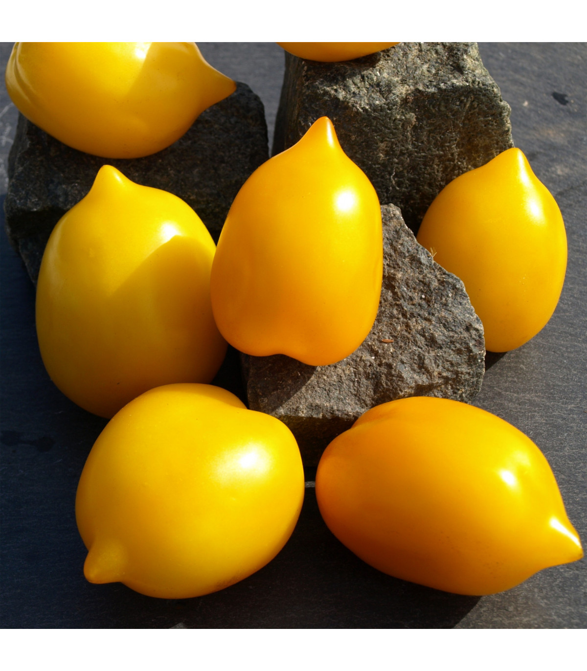 Paradajka Lemon Plum - tyčková paradajka - Lycopersicon lycopersicum L. - predaj semien paradajok - 6 ks