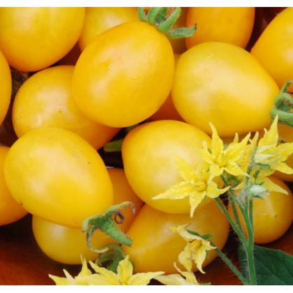 Paradajka Ildi - tyčková paradajka - Lycopersicon lycopersicum L. - predaj semien parajdajok - 0,1 g