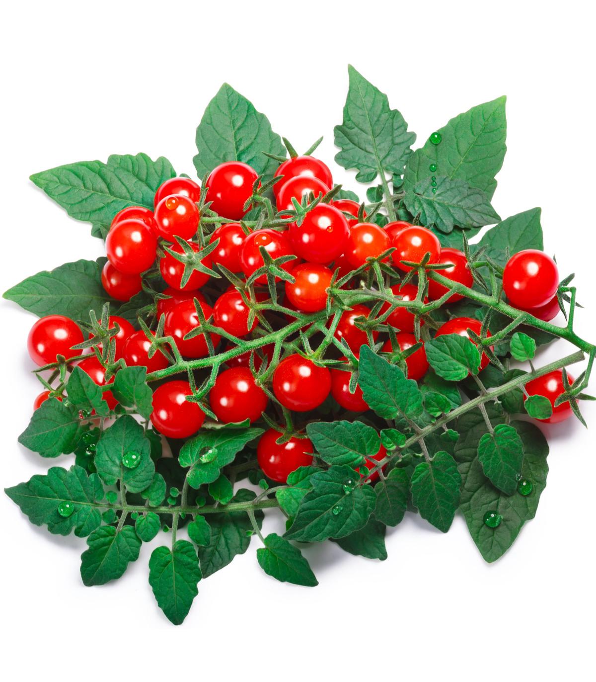 Divoká paradajka ríbezľová Sweet Pea - červená farba - Solanum pimpinellifolium - predaj semien divokých paradajok- 6 ks