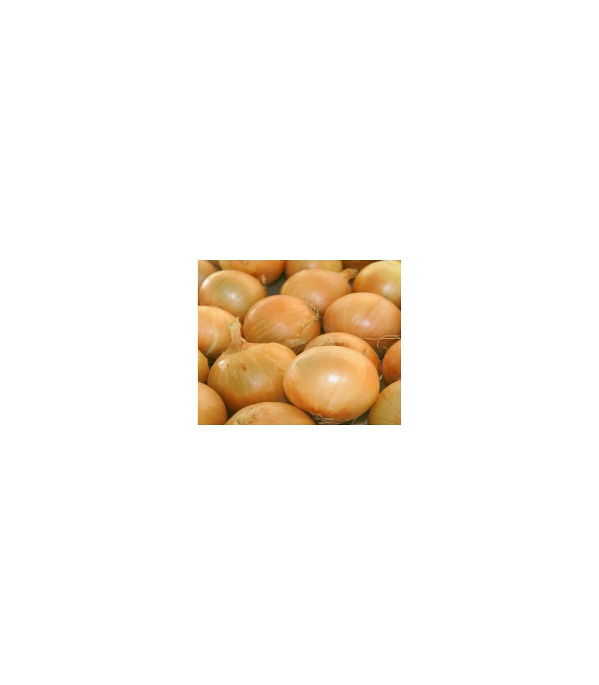 Cibuľa ozimná Senshyu Yellow - Allium - semená cibule - 0,4 g