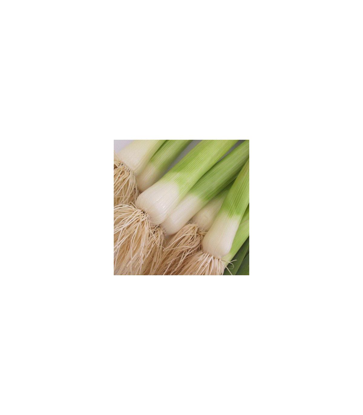 Pór bio kvalita Belton F1 - BIO semená póru - 10 ks