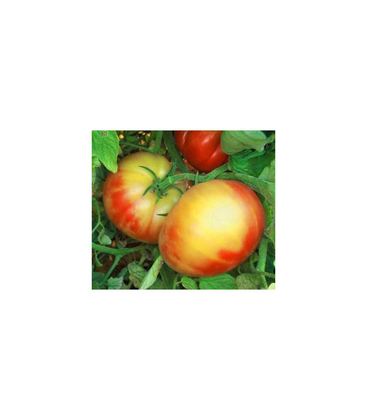 Rajče dvoubarevné - semena rajčete - 6 ks