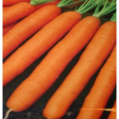 Mrkva Amsterdam skorá karotka - osivo mrkvy - Daucus carota - 1 gr