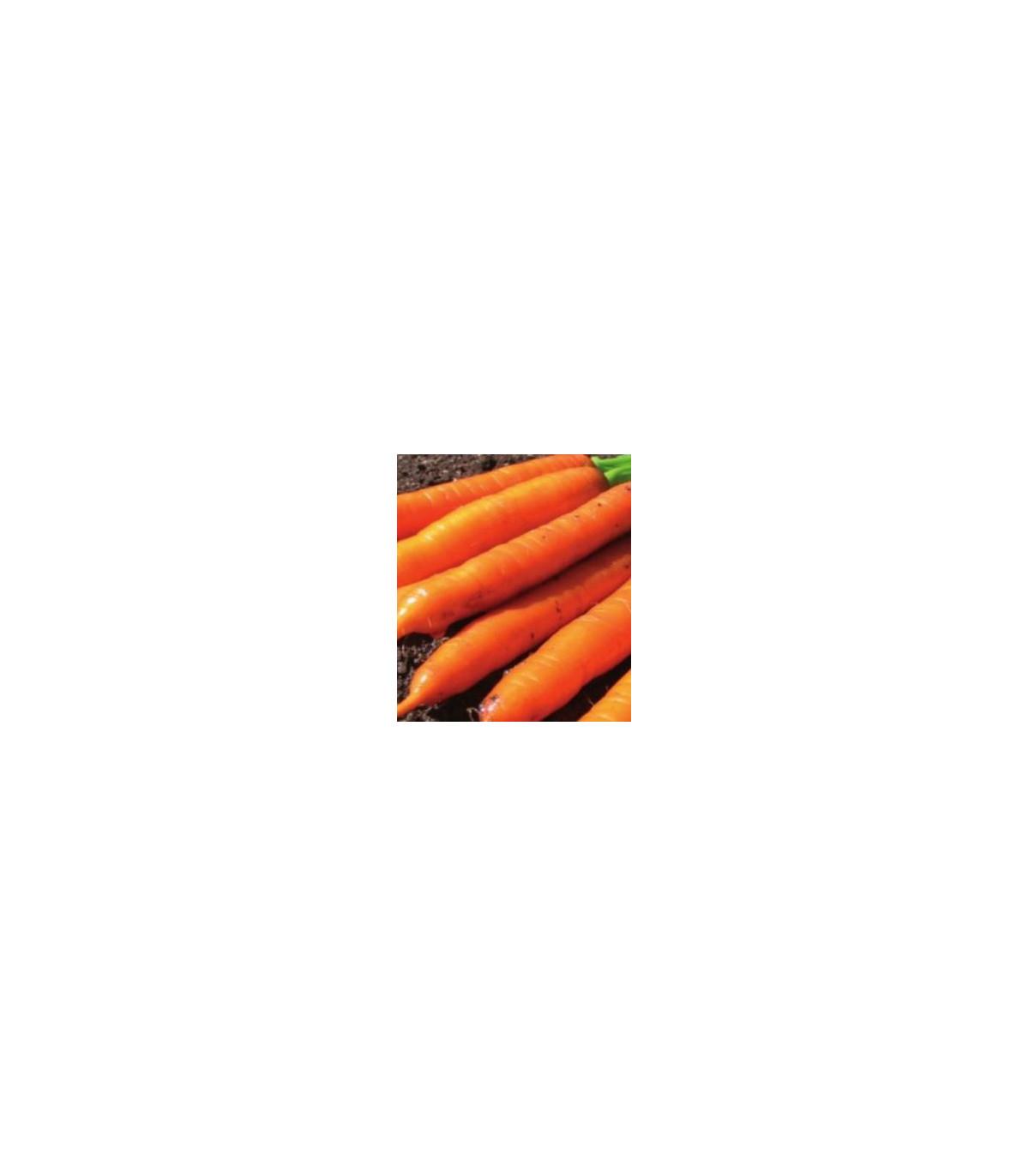 Mrkva F1 Ingot - semená mrkvy - Daucus carota - 50 ks