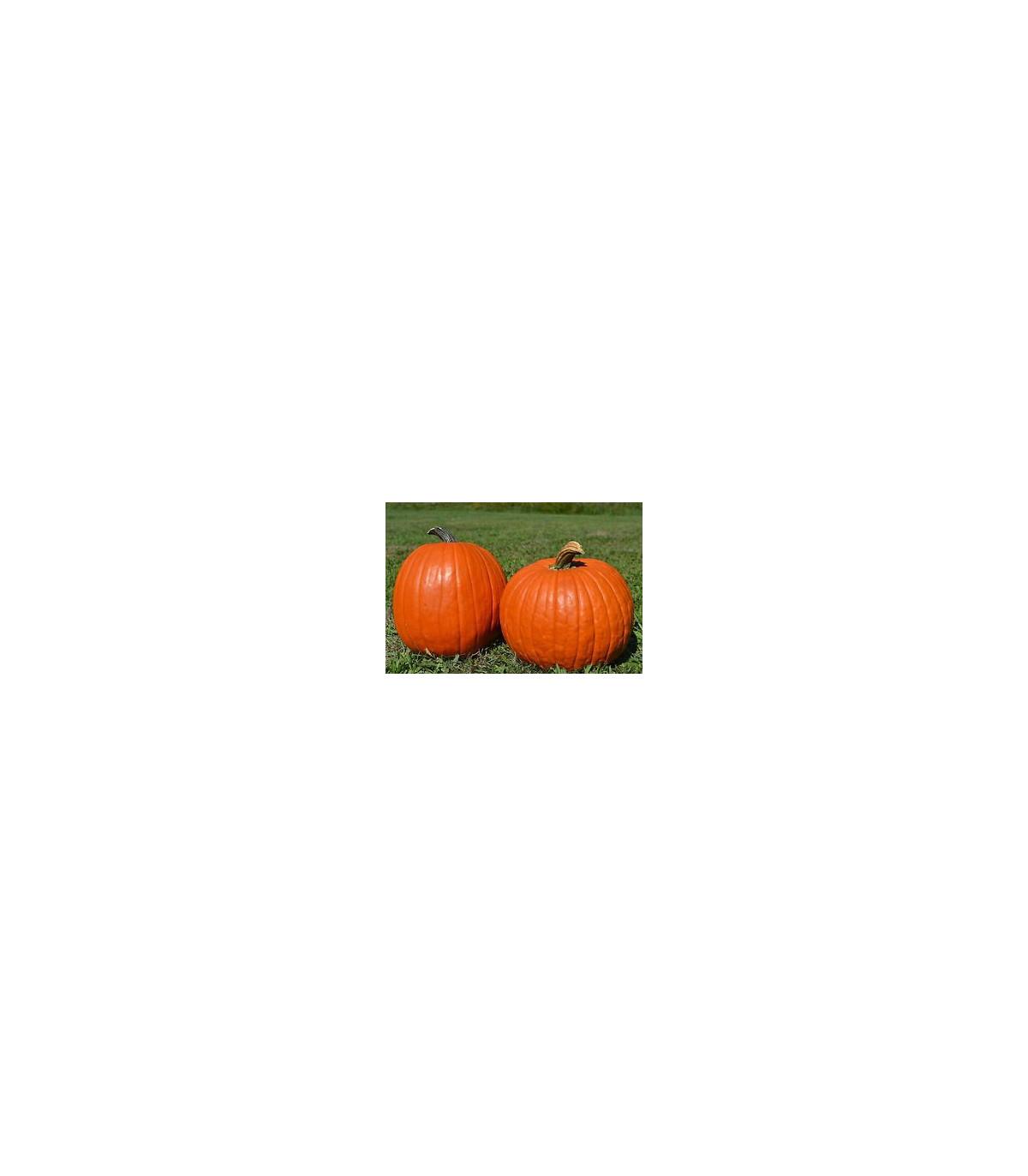 Tekvica Big Max - semená - 4 ks - Cucurbita pepo