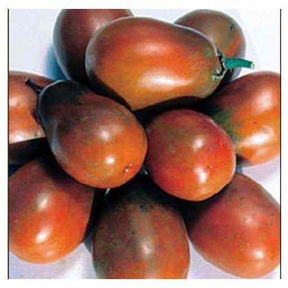 Rajče- Černá švestka- semena- 6 ks- Lycopersicon esculentum