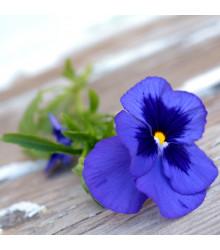 Sirôtka Schweizer Riesen Alpensee - Viola wittrockiana - predaj semien sirôtok - 30 ks
