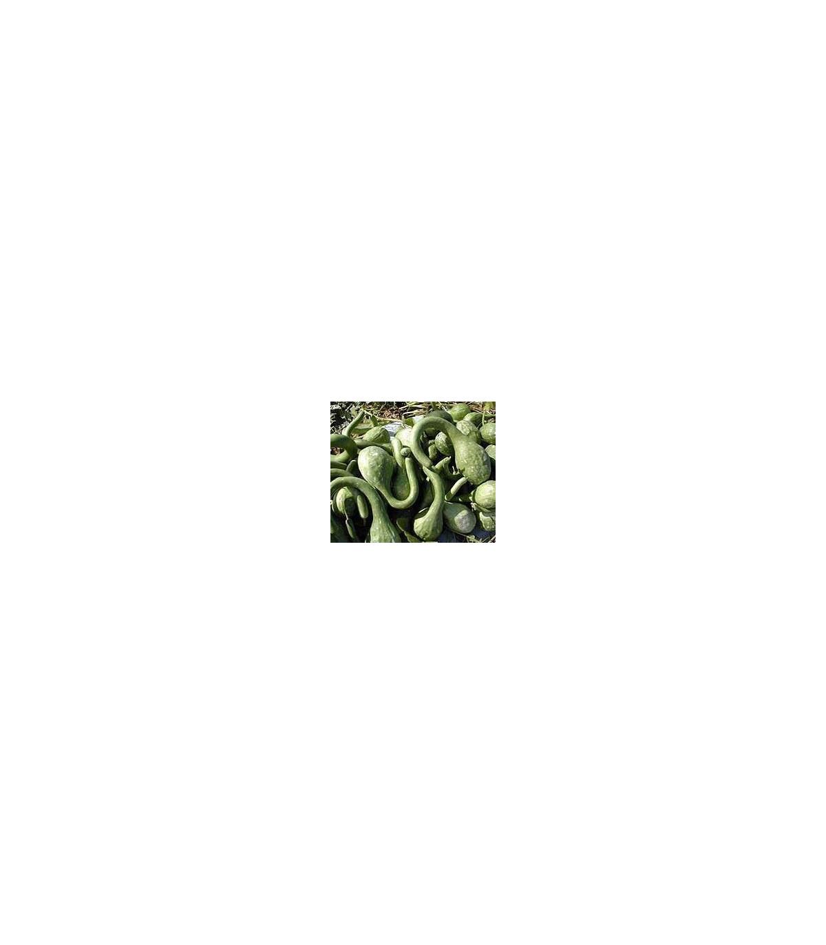 Indická uhorka Lagenária Dipper - Lagenaria siceraria - semená tykve - 6 ks