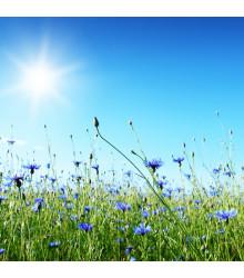 Letničky zmes Záhradný sen v modrom - predaj letničiek - 0,9 g