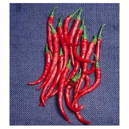 Kajenské koření - Cayenne pepper - prodej semen - EXTRA dlouhý - 6 ks