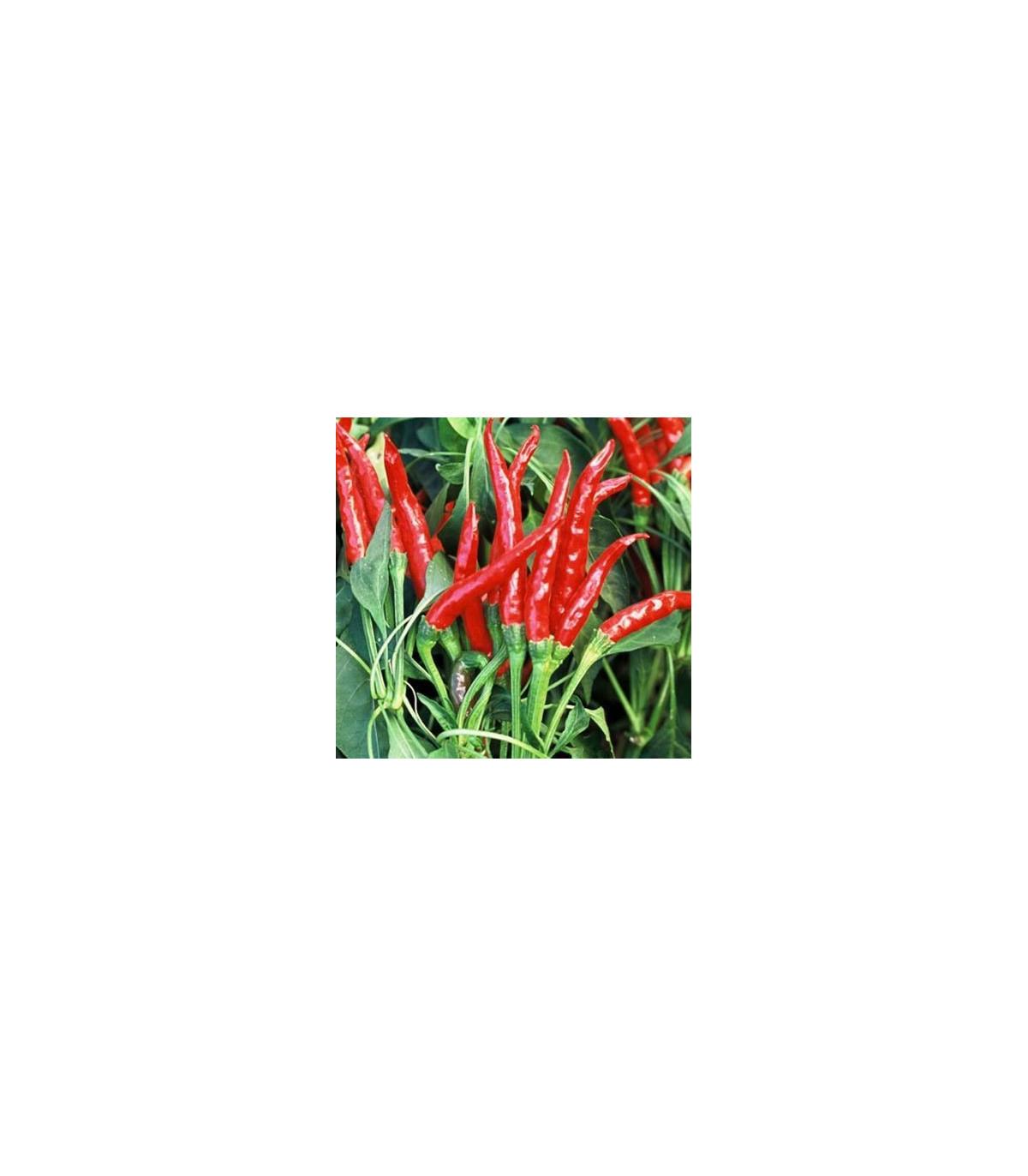 Chilli thajské HOT - extra pálivé - prodej Chilli papriček - 6 ks