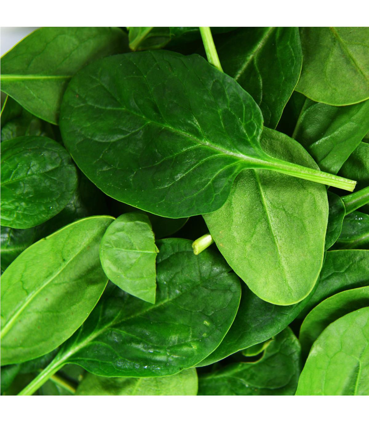BIO Špenát siaty Palco F1 - Spinacia oleracen L. - semená bio osív - 70 ks
