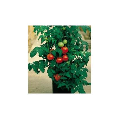 Paradajka Patio - semená paradajok - 6 ks