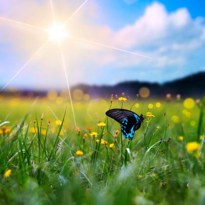 Květinová směs pro motýly - osivo pro motýly - 3 gr