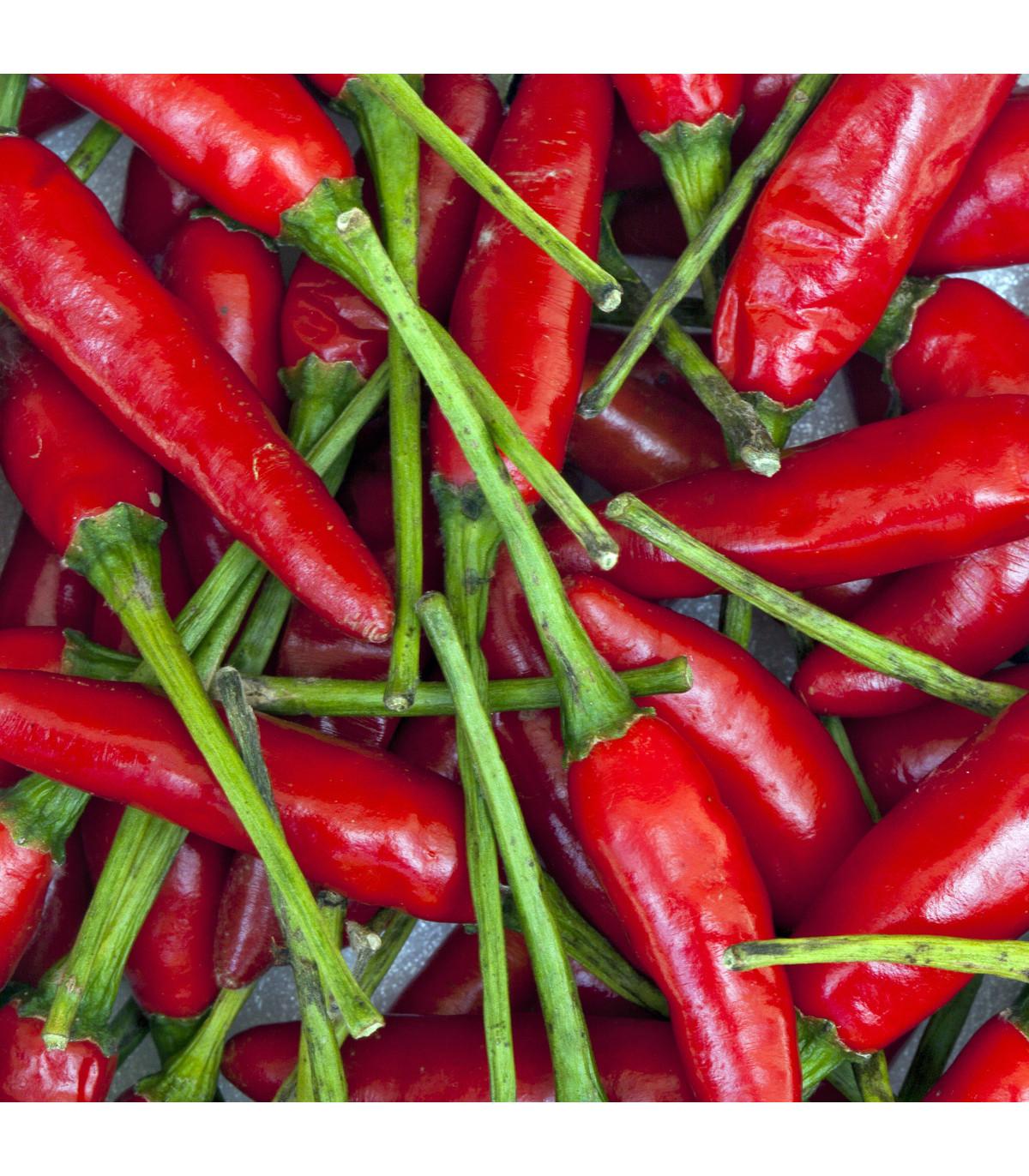 Chilli - Aji delight- semená - 7 ks - Capsicum baccatum