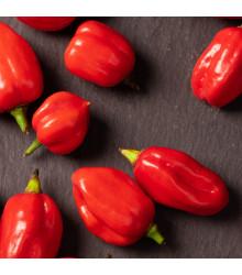 Chilli 7 Pot Douglah Red - semená - 7 ks