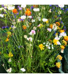 Letničky zmes - romantická záhrada - semená letničiek - 0,9 gr