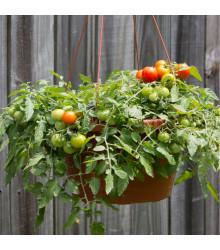 Paradajka - Cherry paradajky Tumbler - semená paradajok - 6 ks