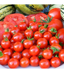 Kolíková paradajka Sweet Aperitif - Lycopersicon esculentum - rajčiak - predaj semien - 6 ks
