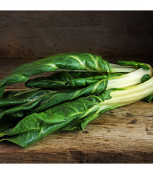 BIO Mangold Lucullus - Beta vulgaris - predaj bio semien - 1 g