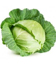 BIO Kapusta biela Filderkraut - Brassica oleracea - predaj BIO semien - 50 ks