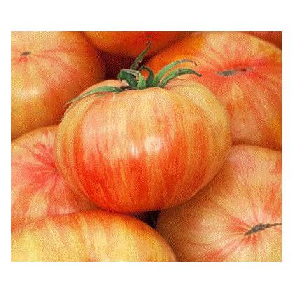 Rajče Copia - semena rajčat - 7 ks