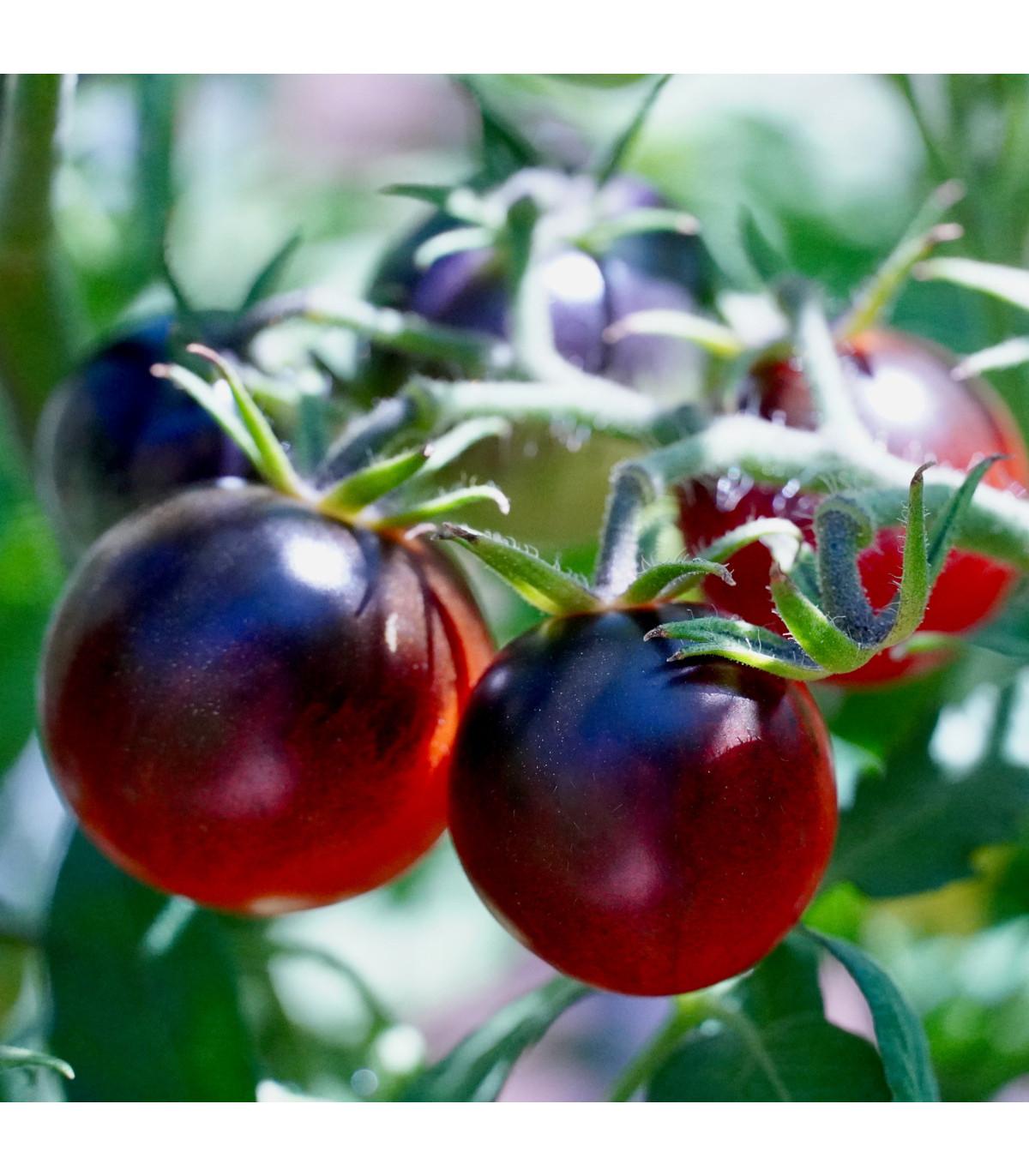 Rajče - černá Cherry rajčátka - semena rajčat - 6 ks