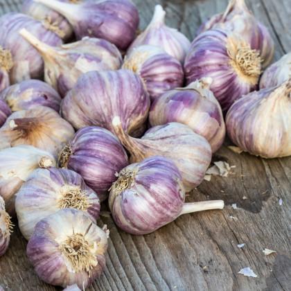 Sadbový cesnak Topaz - Allium sativum - paličiak - cibuľoviny cesnaku - 4 ks