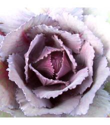BIO Kapusta červená Granat - Brassica oleracea - predaj bio semien - 40 ks