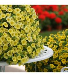 Minipetúnia Kabloom Yellow F1 - Milionbells - Calibrachoa Hybrida - predaj semien - 7 ks