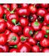 Chilli Large Red Cherry Hot - Capsicum annuum - semená - 7 ks