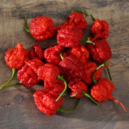 Chilli Carolina Reaper - najpálivějšie chilli - Capsicum chinense - semená - 5 ks