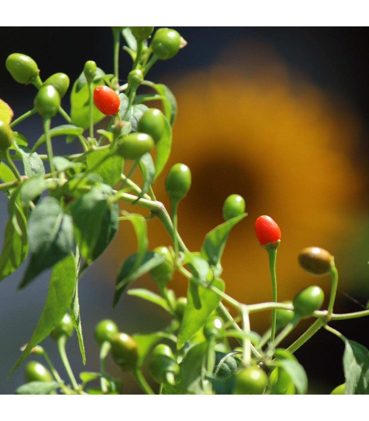 Chilli Tepin - Capsicum annuum - semená - 7 ks