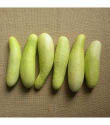Uhorka šalátová Martini F1 - Cucumis sativus - predaj semien - 10 ks