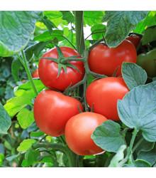 Kolíková paradajka Tornado F1 - Lycopersicon esculentum - rajčiak - predaj semien - 25 ks