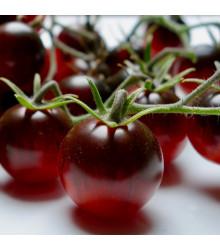 Kolíková paradajka Artisan Purple Bumble Bee - Lycopersicon esculentum - rajčiak - predaj semien - 5 ks