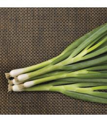 Cibuľa zväzková zimná Freddy - Allium fistulosum - predaj semien - 250 ks