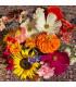 Pestrá kytica - letničková zmes - predaj semien - 20 g