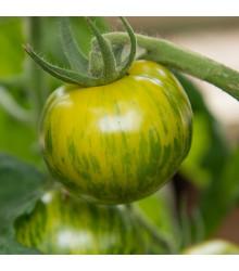 BIO paradajka Zelená zebra - Lycopersicon lsculentum - rajčiak - predaj bio semien rajčiaka - 6 ks